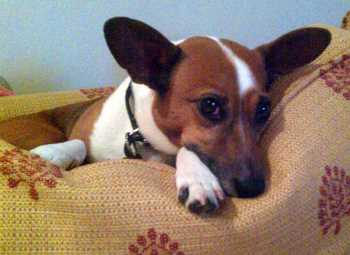 Hypnotherapy for dogs